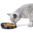 Beste kattenvoer aanbiedingen